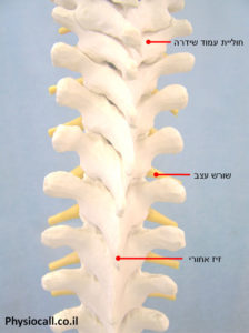 חוליות עמוד השדרה