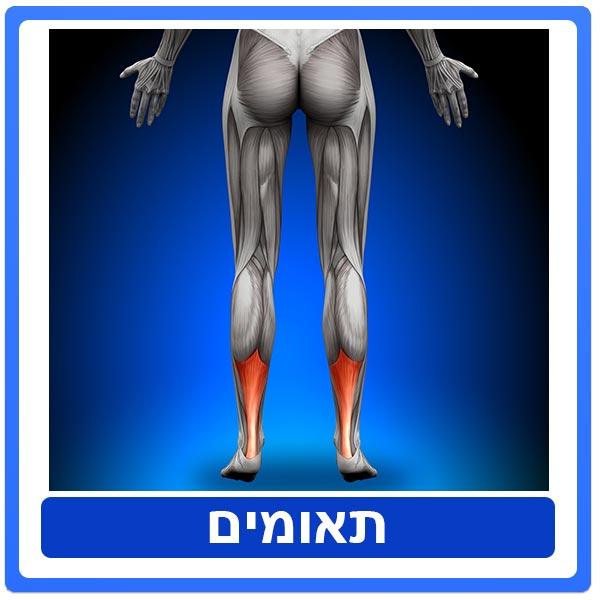 טיפול פיזיותרפיה לאחר מתיחה/קרע בשרירי השוק האחוריים – שרירי התאומים