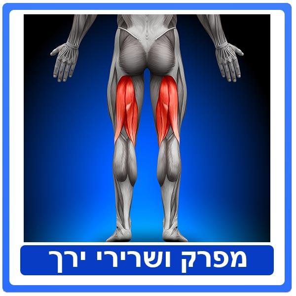 מפרק ושרירי ירך