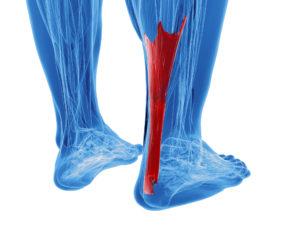 3d rendering of human achilles tendon